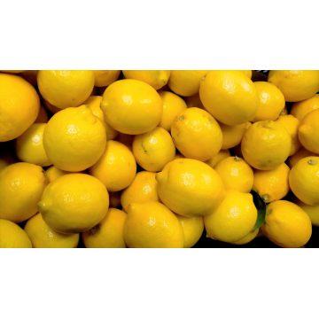 Limón Menorca