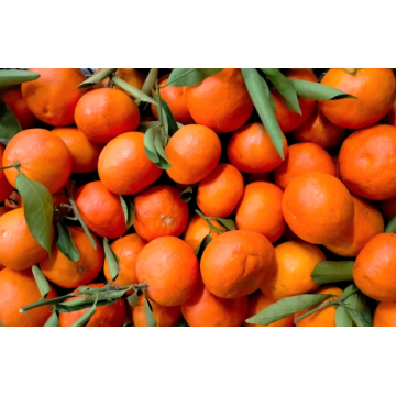 Mandarina Mallorca