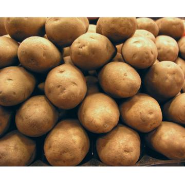 Patata Menorca (malla 2kg)