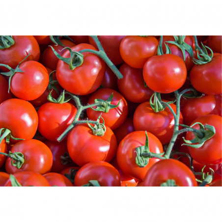 Tomate ramillete Menorca (1kg)